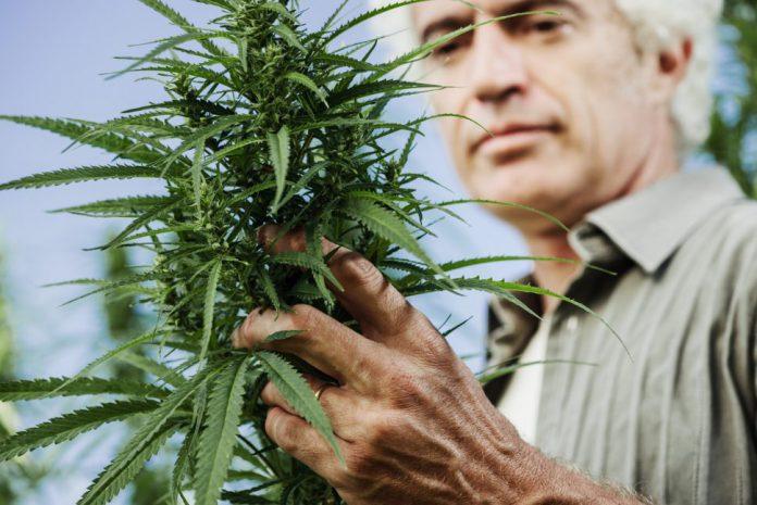 Wpływ marihuany na autoimmunologię